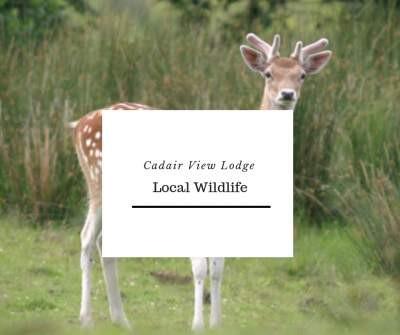 Local Snowdonia Wildlife.jpg