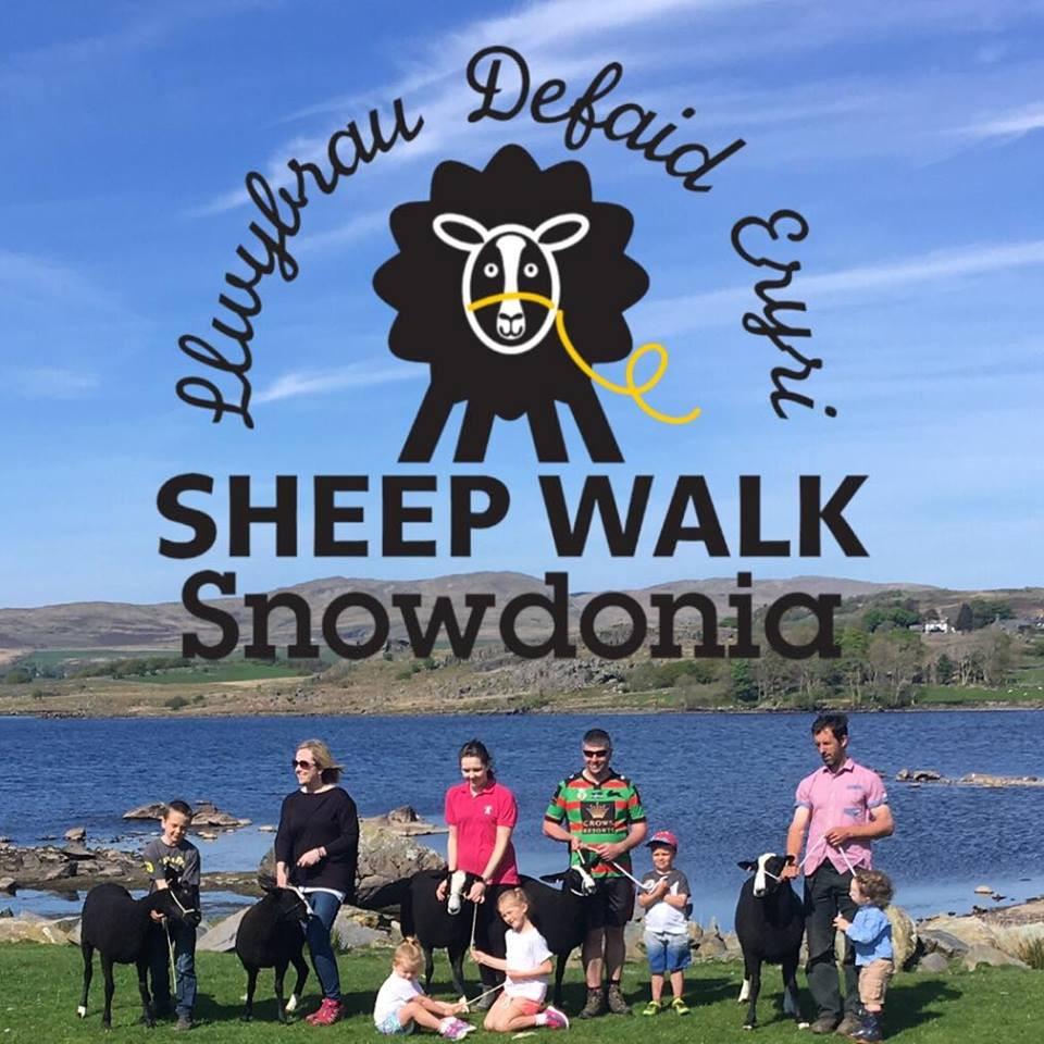Sheep Walk Snowdonia logo