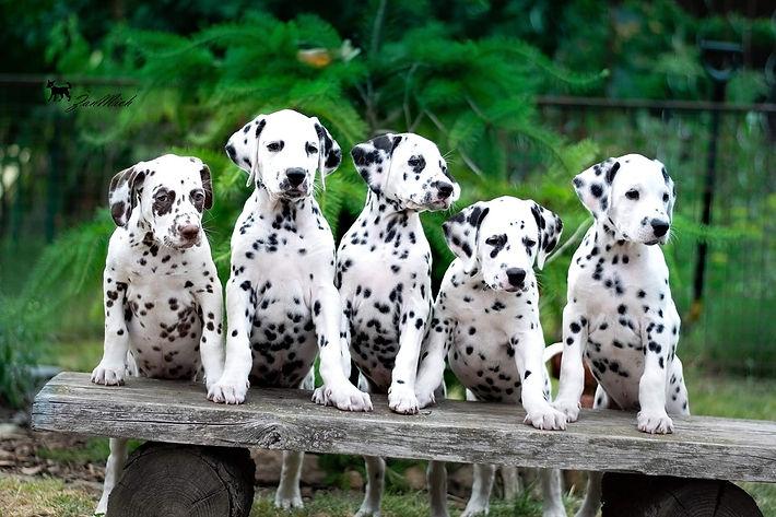 pupies.jpg