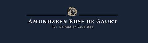 Amundzeen Rose de Gaurt stud dog