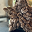 Thumbnail: BIRCH WOOD CONES STAR