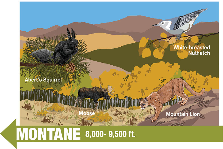 Interpretive Sign Drawing  -Montane