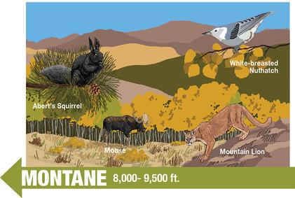 Montane Life Zone