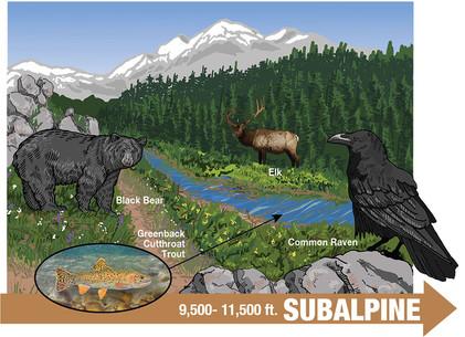 Subalpine Life Zone