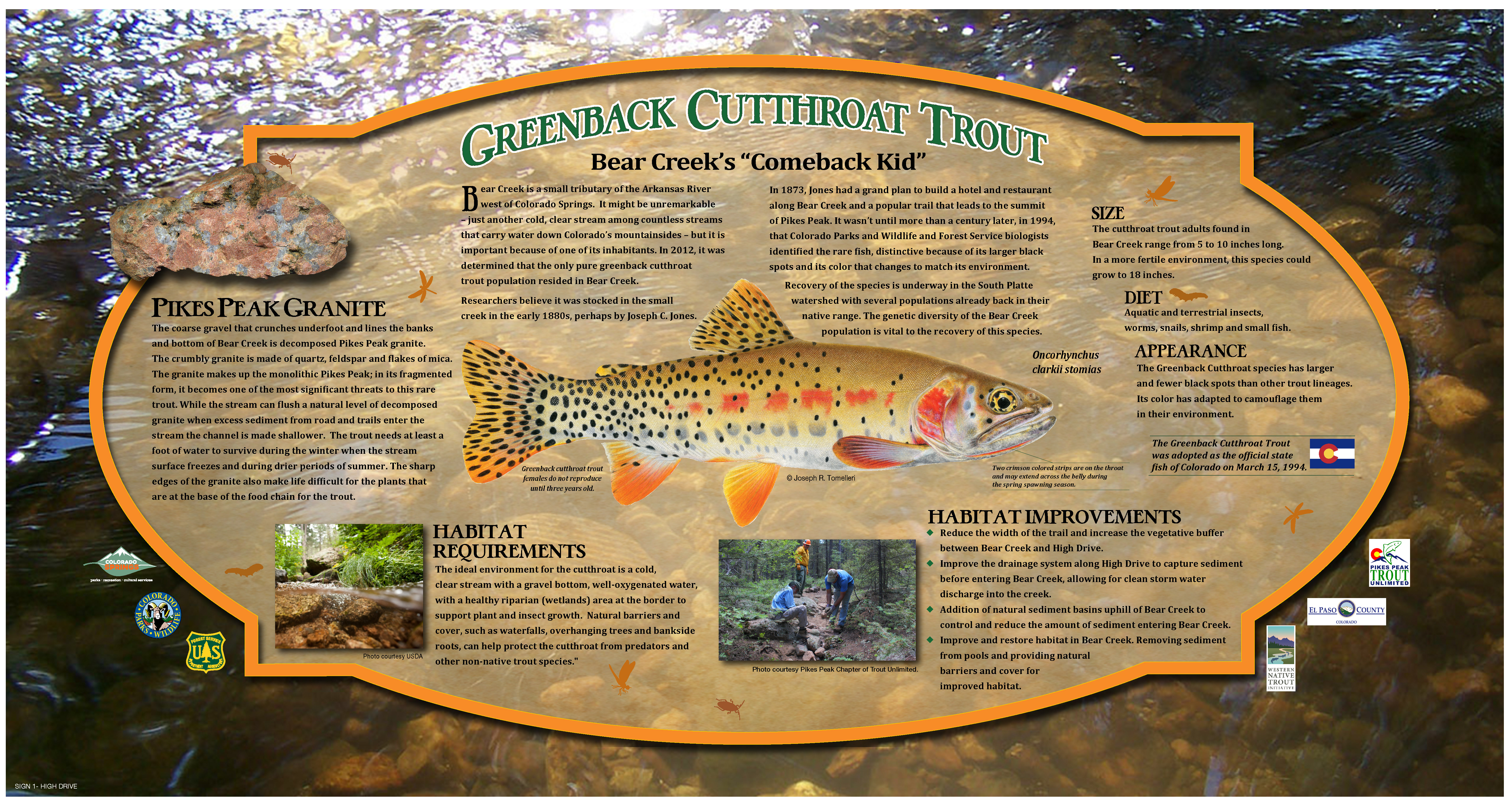 Bear Creek Trout