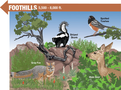 Foothills Life Zone