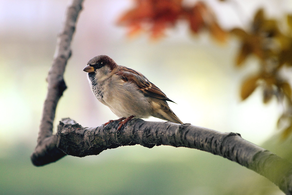 Sparrow Perched