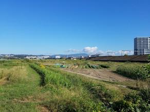 秋冬野菜追肥と草取り、タマネギ圃場準備、ブロッコリー、ニンジン、落花生収穫