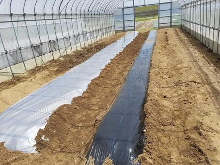 トマトの畝立て、メロンの芽かきと農薬散布、事務所の畑