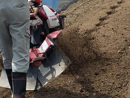 ナスの畝立てとサツマイモとオクラの土壌改良、カボチャの播種