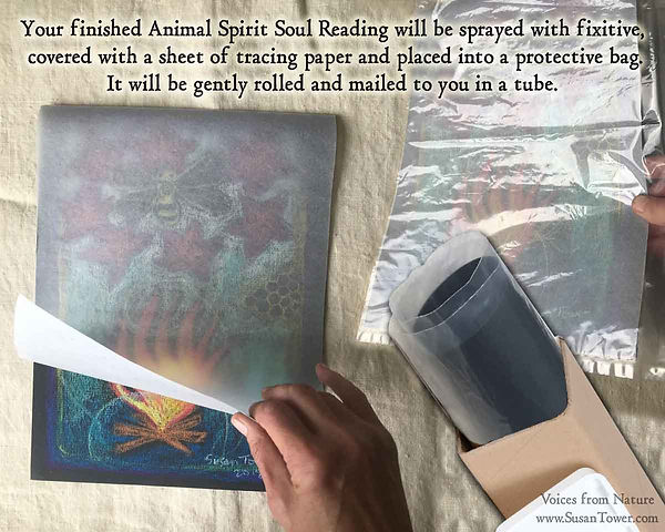 Animal-Spirit-Reading-by-Susan-Tower-int