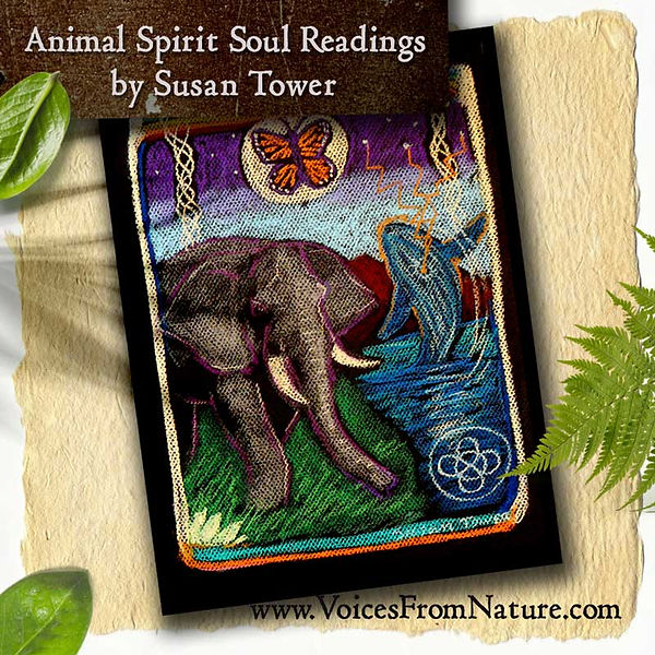 Animal-Spirit-Soul-Reading-Elephant-spir