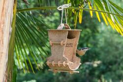 Le tête à tête des oiseaux
