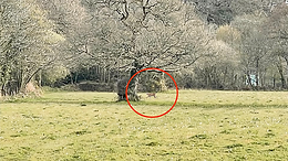 Is 'Coombe Cougar' photo evidence of ghost cats?
