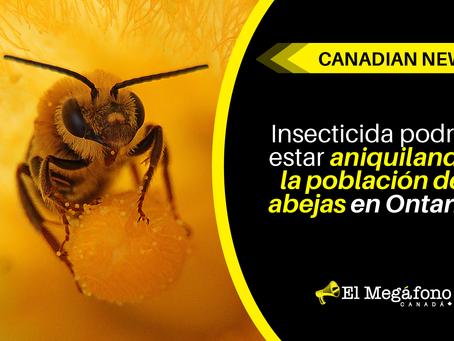 Insecticida podría estar aniquilando la población de abejas en Ontario