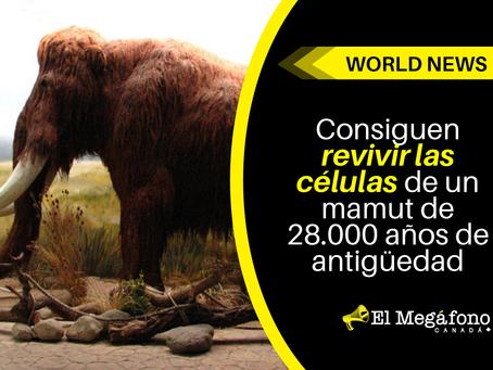 Consiguen revivir las células de un mamut de 28.000 años de antigüedad