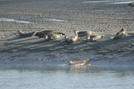 séance individuelle sur mesure Baie de Somme Tiphaine Colson