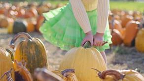 Pumpkin Picking in Hertfordshire