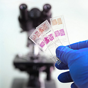 histology-laboratory-microscope-stained-