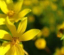 florescendo