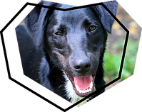 icone éducation canine avec chien noir pour sweetdog