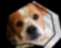 icone garde visite à domicile avec chien sur lit pour sweetdog