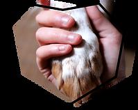 poignée de main entre Homme et chien médiation animale