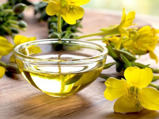 NEWmega™ Evening Primrose Oil CP-REF - Dầu hoa anh thảo