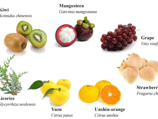 VeryBerry™ ACNEcare - Hỗn hợp chiết xuất trái cây trị mụn từ Nhật Bản