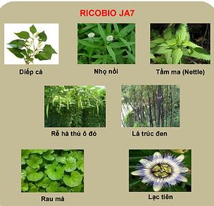 Ricobio JA7.PNG