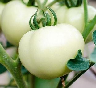 Pearl Tomato™.jpg