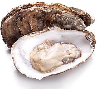 oyster_245235925.jpg