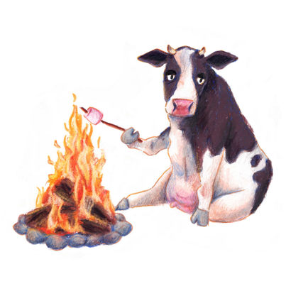 A Cow Roasting Vegan Marshmallows