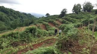 Guria's Extraordinary Terroir: a weekend in Western Georgia