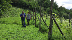Zurab's Vines in July