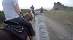 Horses at Dusk