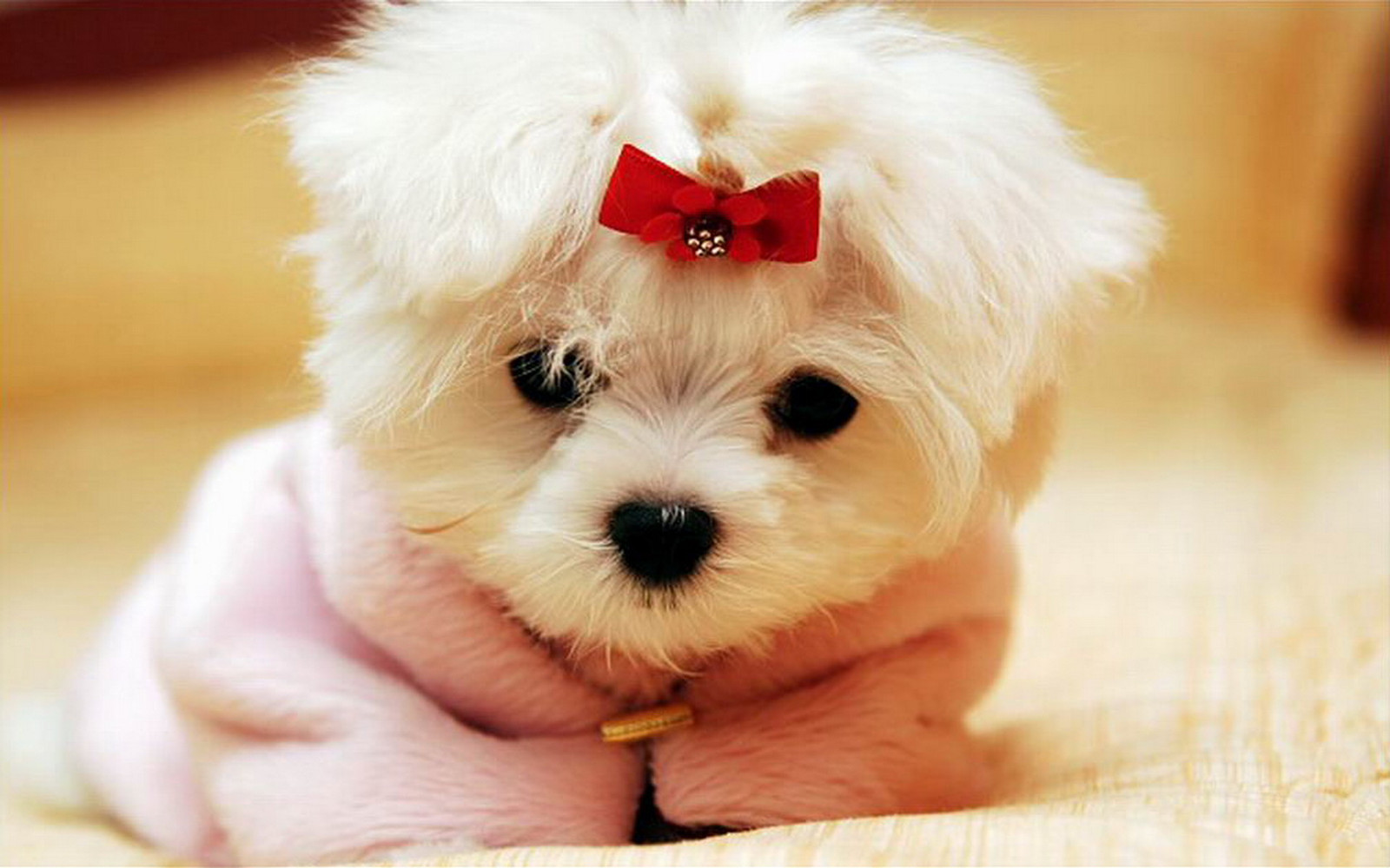 Cute Dog Wallpaper Hd For Android 3jpg