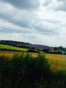 Lavender field in the English countryside