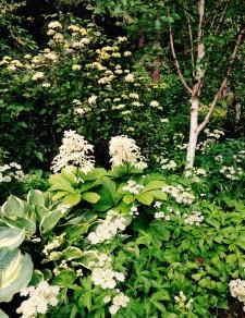 White in the Garden