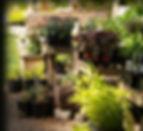 nursery_2.jpg