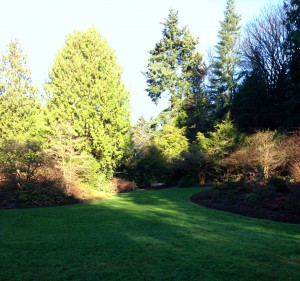 The winter garden lawn
