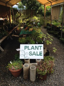 Chase Garden fall plant sale