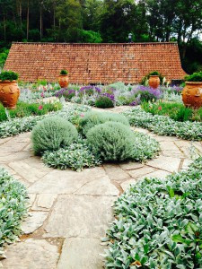 Gertrude Jekyll planting in the grey garden at Hestercombe