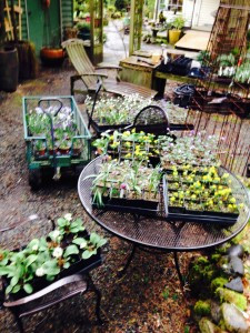 Cleaned plants ready to be loaded