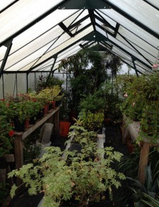 Putting the Garden to Bed – Part 2