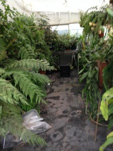 The fern greenhouse