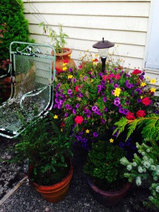 Mixed annual basket