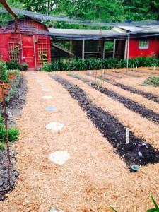 Main path through the veggie garden to the chicken coop.