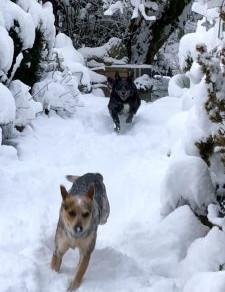 Snow at Old Goat Farm
