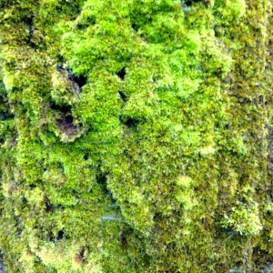 close up of the moss on a tree trunk